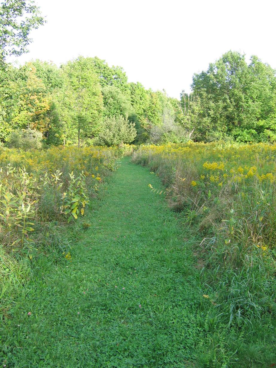 sanctuary_meadow_path