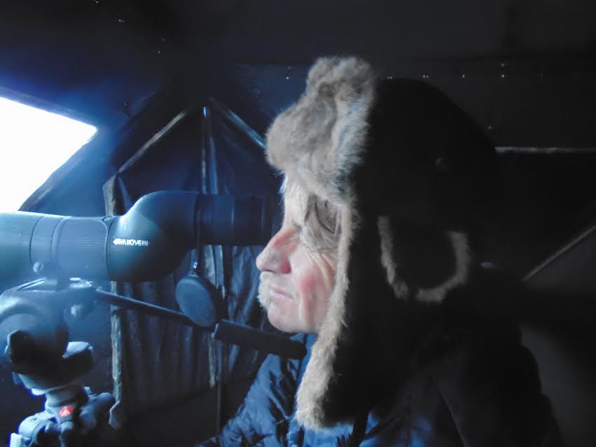 NYSDEC Biologist Scott Van Ardsdale watching for a Golden Eagle on a below zero morning.