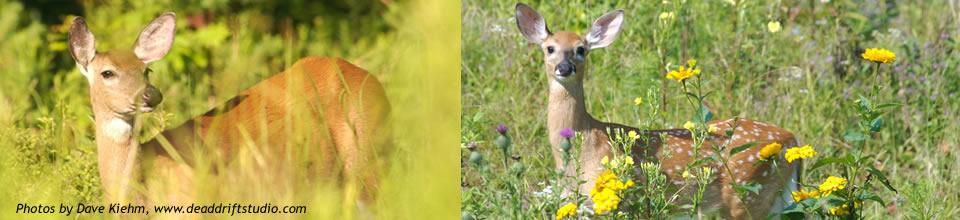 FrontPageShowcase-DKiehm-Deer