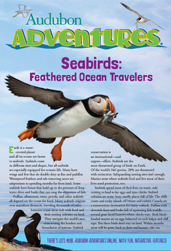 seabirds_feathered_ocean_travelers_cover