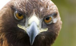 http://www.vertebratejournal.org/wp-content/uploads/2011/06/Photograph-by-Murdo-Macleod.jpg