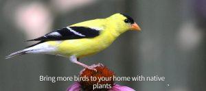 plantsdatabase