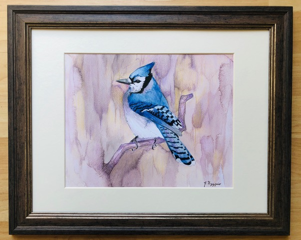 """Blue Jay"" – 11""x14"", print of watercolor original by Jennifer Hyypio, matted and framed, with glass."