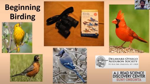 beginning birding